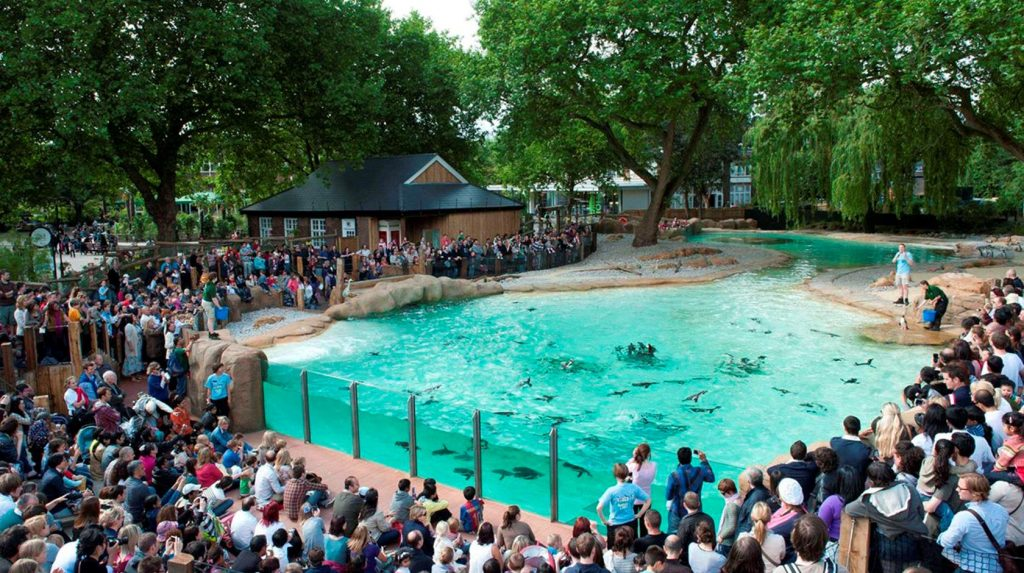 zsl_london_penguin-beach